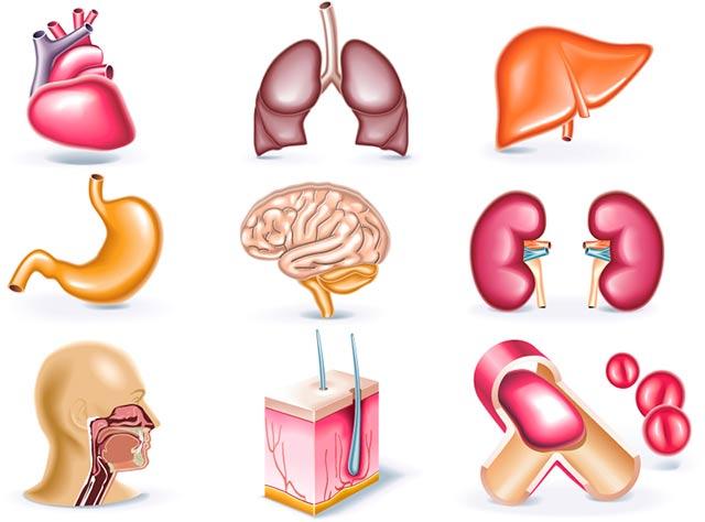 Сколько стоят органы человека