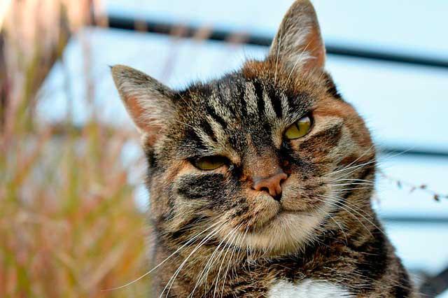 сколько лет живут коты