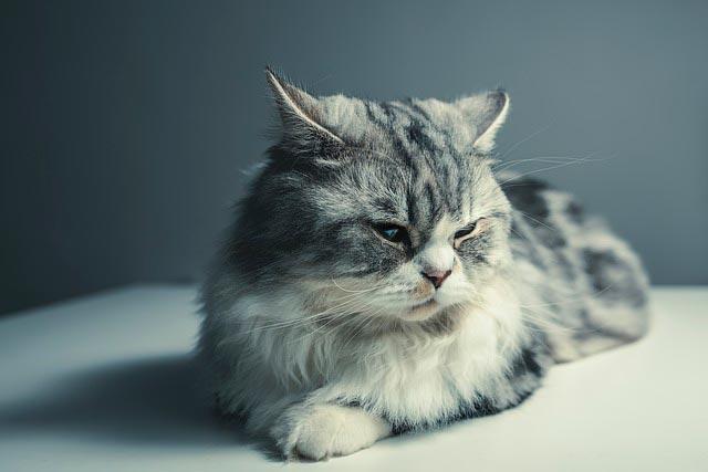 сколько живут коты