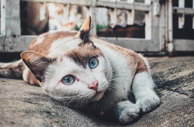 сколько живут коты в домашних условиях