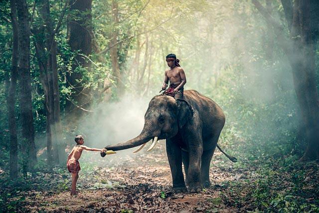 Прирученный слон