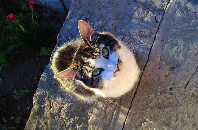 во сколько кошка начинает просить кота