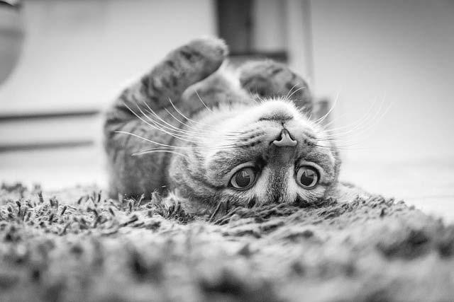 сколько по времени кошка просит кота