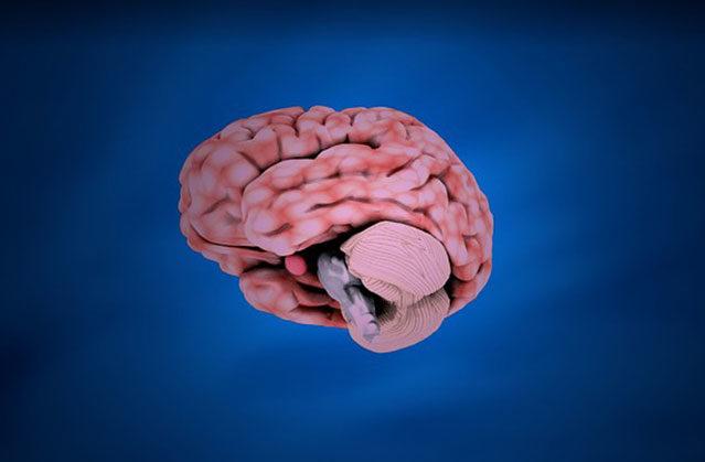сколько весит человеческий мозг