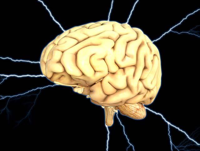 сколько весит мозг взрослого человека