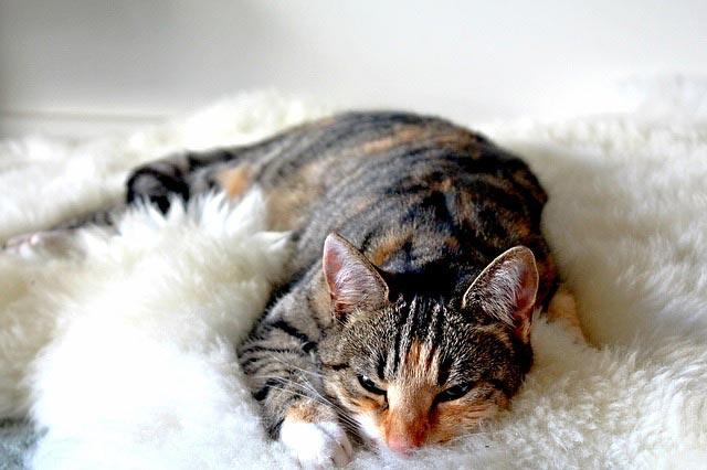 Сколько спят коты