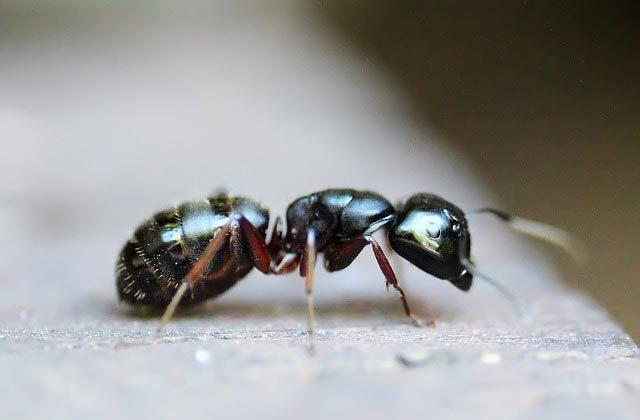 Сколько лет живут муравьи